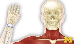 FSU Online Courses Anatomy: Musculoskeletal and Integumentary Systems for Florida State University Students in Tallahassee, FL