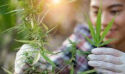 Valencia College Online Courses Cannabis Cultivation and Processing for Valencia College Students in Orlando, FL