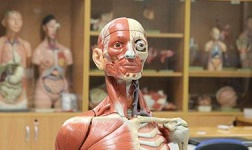 CMU Online Courses Human Anatomy for Central Michigan University Students in Mount Pleasant, MI