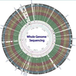 UCSD Online Courses Whole genome sequencing of bacterial genomes - tools and applications for UC San Diego Students in La Jolla, CA